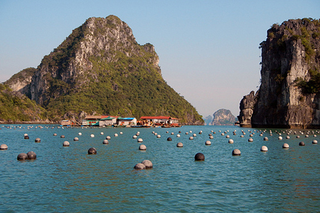 Floating pearl farm in Halong Bay