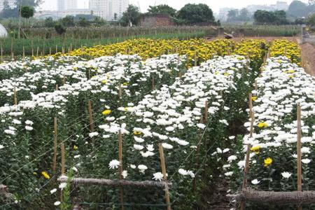 Flower gardens in Tay Tuu Village
