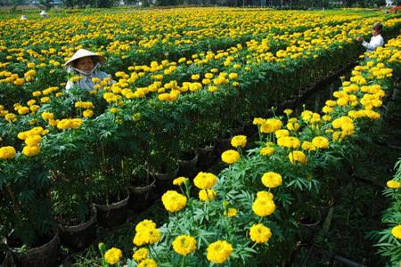 Gardeners in Ngoc Ha Flower Village