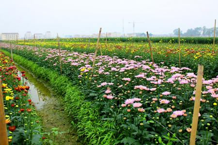 Me Linh Flower Village