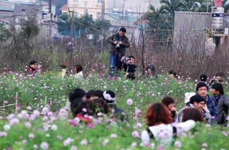 Nghi Tam Flower Village in Tet Holiday
