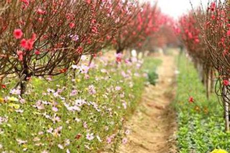 Nghi Tam Flower Village