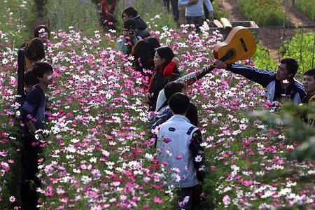 Nhat Tan flower gardens in spring