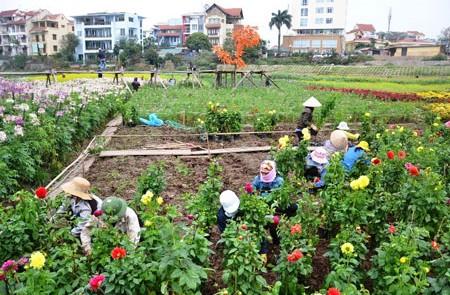 Quang Ba Flower Village