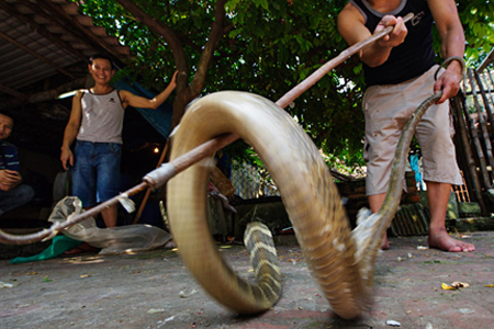 Le Mat Snake Village