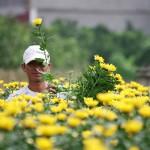 Flower village of Tay Tuu