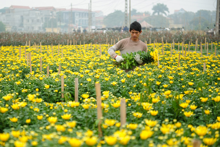 Tay Tuu Flower village