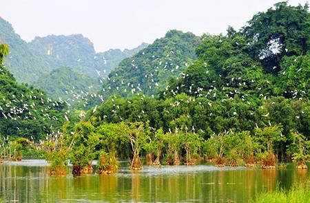 Bird Watching in Hanoi