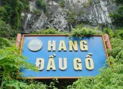 Dau Go Cave (Driftwood Cave)