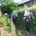 Hill tribe women with packs of rice on their back, Kho Muong village