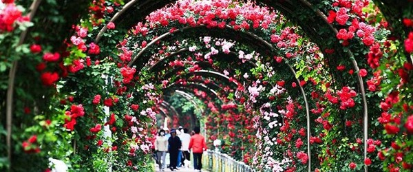 Bulgaria Rose Festival in Hanoi