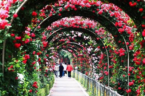 Bulgaria Rose Festival in Hanoi