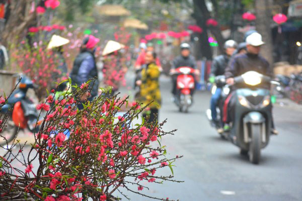 Peach blossoms are sold every street during Tet Holiday