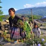 Explore the Northwest of Vietnam Tour