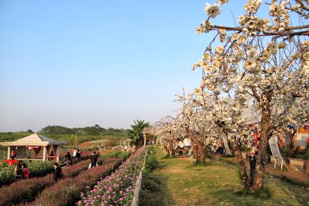 Nhat Tan Flower Village