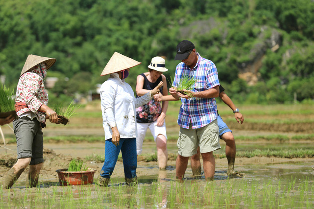 Tourists planting wet rice in May Chau Valley