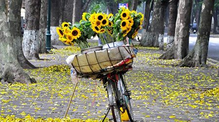 5 Romantic Streets in Autumn of Hanoi