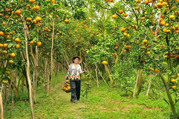 Lush green fruit garden in Southwest Vietnam